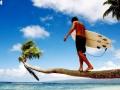 surfboard tree copy